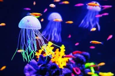 Hellblaue Quallen, bunte Fische und Korallen in einem Aquarium