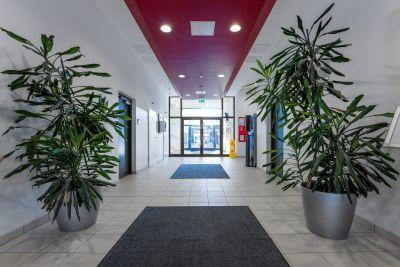 Eingangsbereich von Bürogebäude, links und rechts grüne Topfplanzen