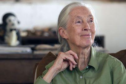 Dr. Jane Goodall im Gombe National Park